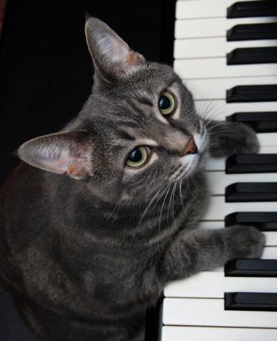 Nora, de pianospelende kat